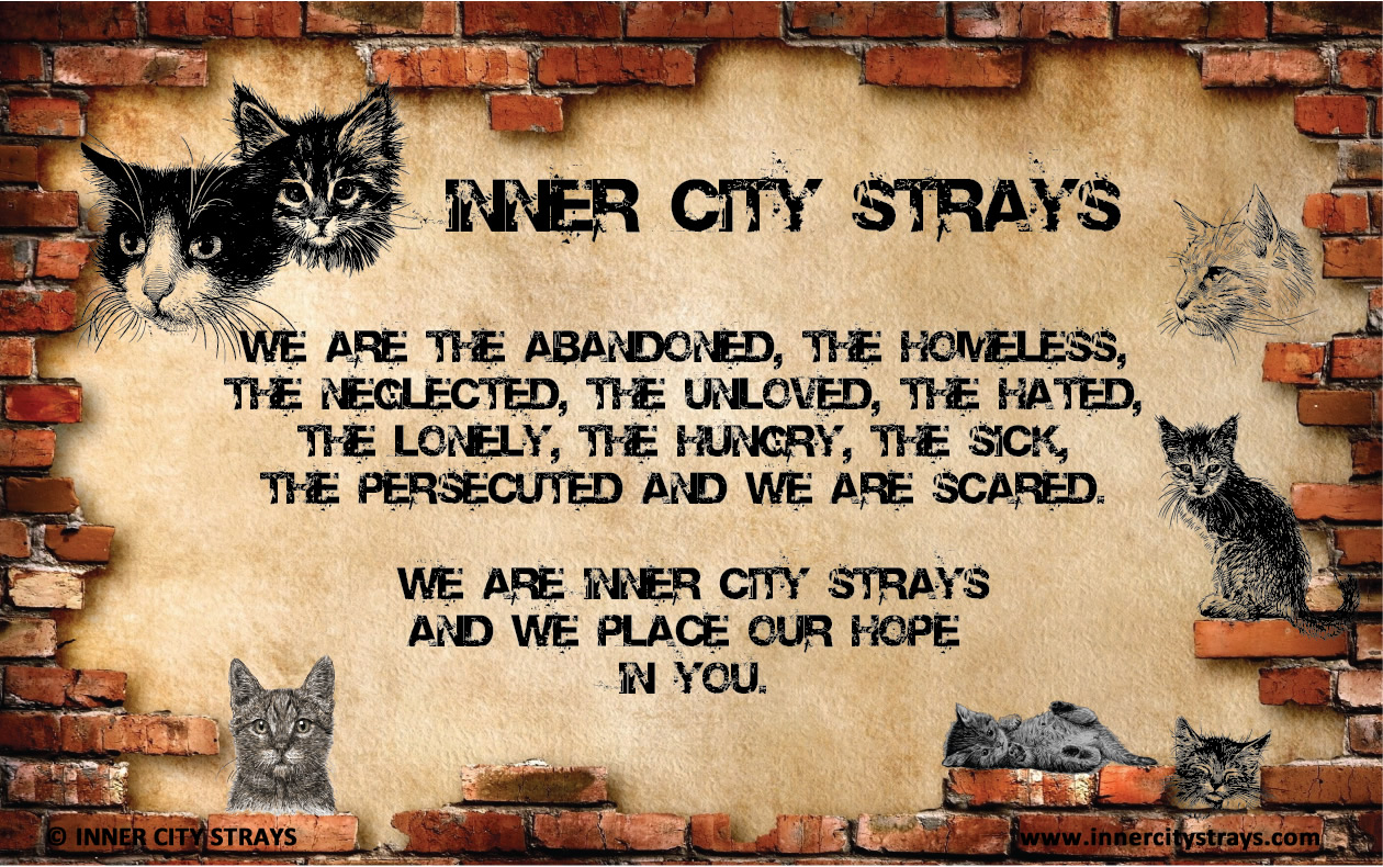 Home - Inner City Strays Cat Home Designs Inside Html on photoshop cat, dom cat, e-mail cat, sharepoint cat, fireworks cat, spastic cat, oracle cat, python cat, cgi cat, curl cat, twitter cat, iphone cat, web cat, marketing cat, linux cat,