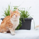 leave-my-cat-grass-alone
